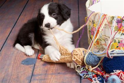 Dog Enough Love #4